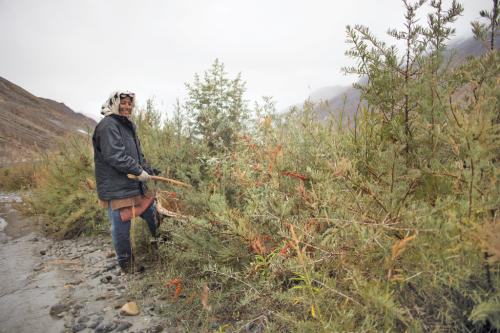 Potential of Spiti Valley's wild fruit waiting to be tapped across India
