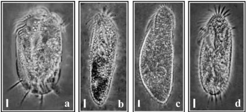 भारी धातुओं के प्रदूषण की निगरानी में मददगार हो सकते हैं सूक्ष्मजीव