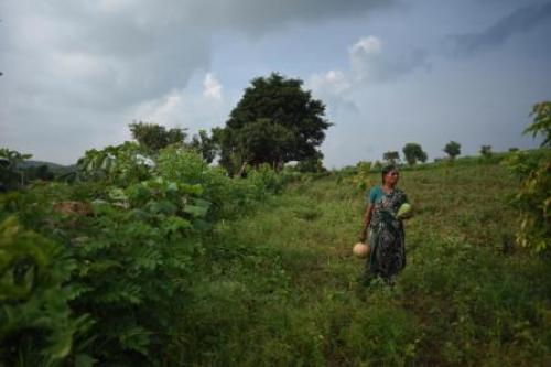 Andhra farmers taste success with Zero Budget Natural Farming