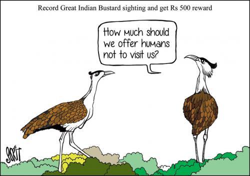 When a critically endangered bird becomes elusive