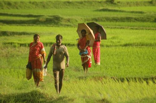 Will this 'pro-agriculture' budget connect with farmers?