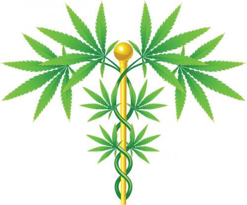 Is India moving towards legalising marijuana?