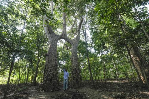 Biodiversity governance: A mix of knowledge and forest management for benefit sharing