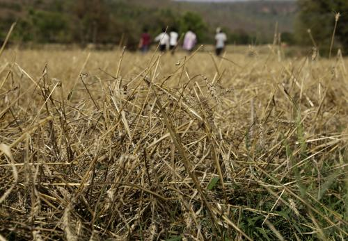 Farmers seek relief after hail, rain damage crops in Rajasthan, UP