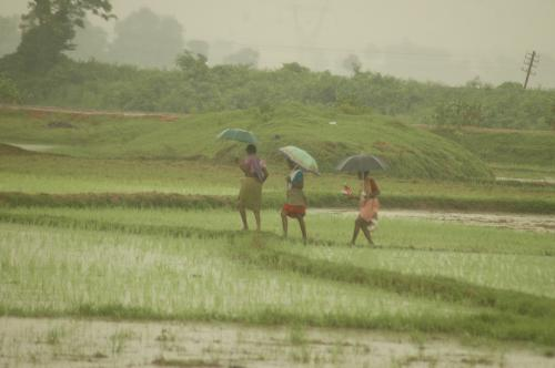'Well-designed integrated farming system can help double farmers' income by 2022'
