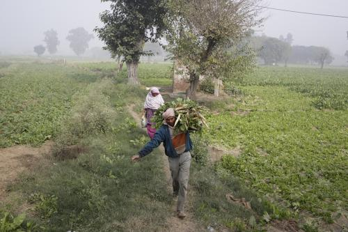 Delhi's crop area reduced by 34%; less than 1% workforce engaged in agriculture