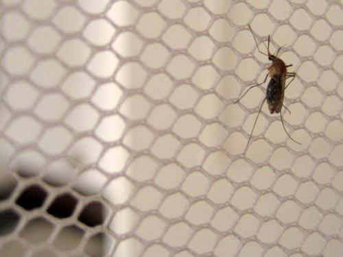 Severe and mixed malaria infections posing new challenges