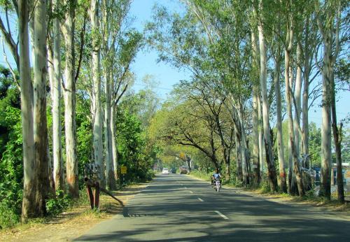 Why Eucalyptus?