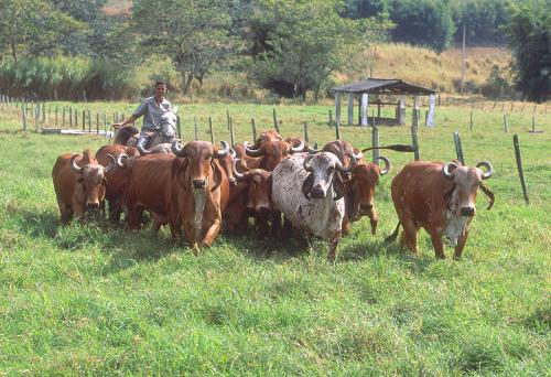 Cutting antimicrobial use, promoting good farming practices can enhance farm productivity