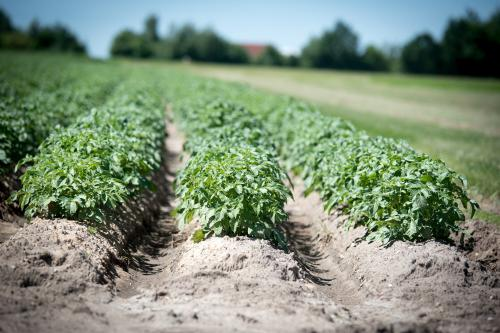 Your food might be growing in contaminated soil