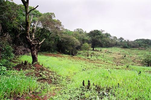 Kerala must opt for heat-tolerant rice varieties for better yield: Study