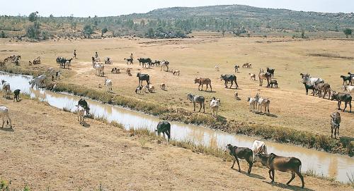 कोलार जिले का मिट्टी भरा तालाब: लोगों और तालाबों की जरूरत लायक धन सरकार नहीं दे पा रही है। लोग भी तालाबों और सिंचाई की नालियों से मिट्टी नहीं निकालते। तालाबों में गाद-मिट्टी भरने से उनकी जल संभरण क्षमता गिरी है (गणेश पंगारे / सीएसई)
