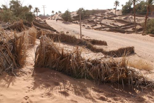 Curbing desertification as critical as mitigating climate change impact