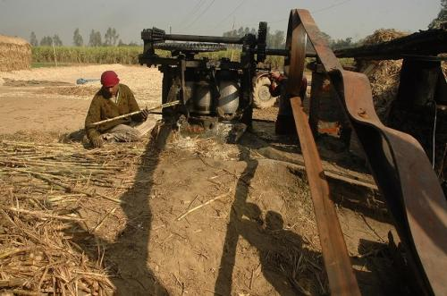 How ethanol tax in some states is affecting crisis-ridden sugarcane farmers