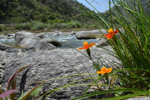 Community-led strategies offer hope for east Himalayan biodiversity