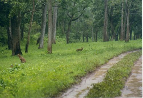 Deforestation rate slowed down: FAO