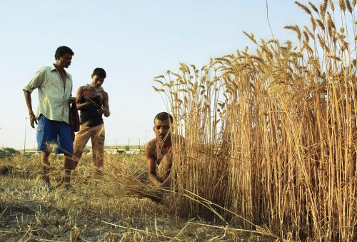 Meagre payments, reluctant states mar Modi's flagship crop insurance scheme