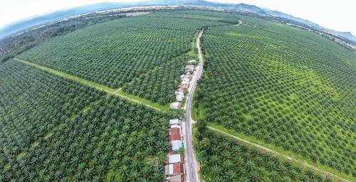 Palm oil consumption increased 230% in almost 2 decades, yet India imports most of it