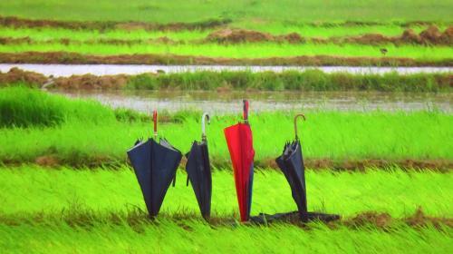 El Niño won't threaten this monsoon: IMD