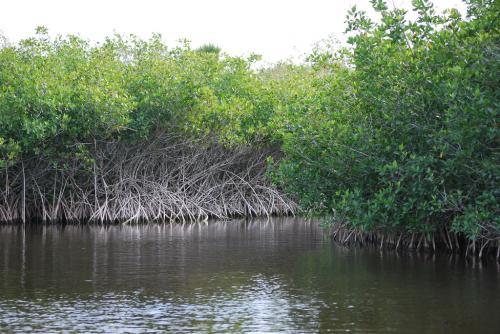 Antibiotic resistant genes found in Kerala mangrove ecosystem