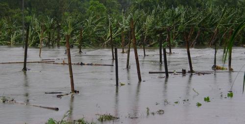 Kerala battles worst floods since 1924, says CM