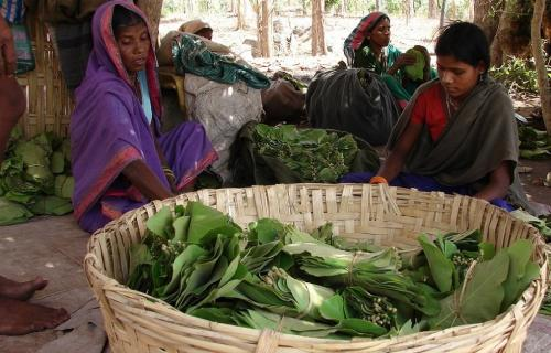 In Odisha, state's monopoly on minor forest produce needs to end