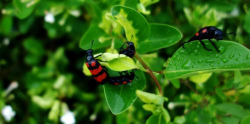 Climate change to make pests hungrier, cause more crop loss