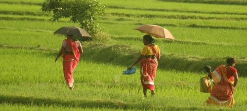 Hard work, but low wages for women farmers