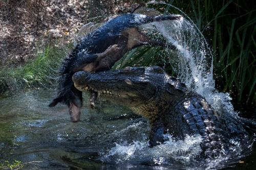Human-Croc conflict: Lessons from Down Under