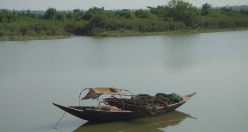 Mangroves destruction violates fundamental rights of citizens: Bombay HC