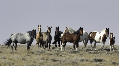 Enemies of the State: America's Mustangs