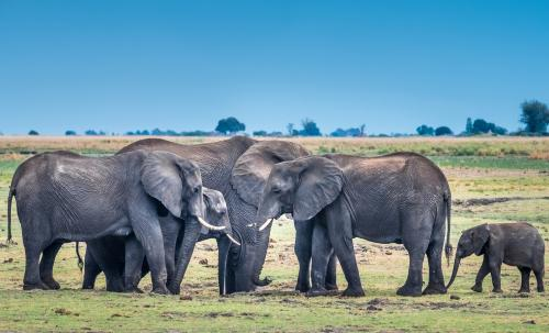 Mystery behind the cracks on African bush elephants' skin decoded