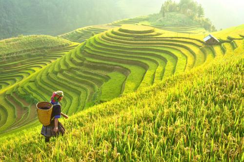 Excess nitrogen fertilisers hamper germination, root growth in rice: study