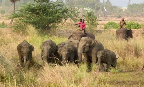 How these two remote districts in Andhra are tackling wild elephant intrusions