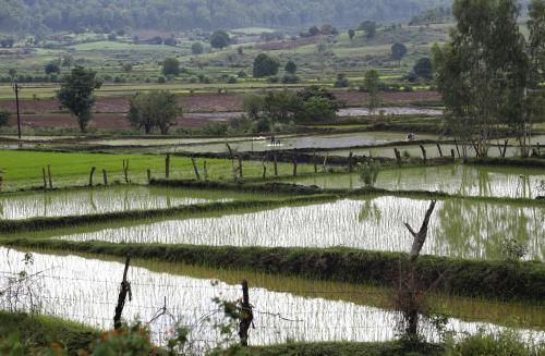हरियाणा: धान की खेती के लिए अब नहरों से नहीं मिलेगा अतिरिक्त पानी