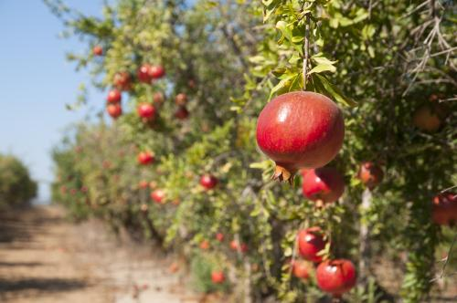 Smart spraying can help cut pesticide use in orchards