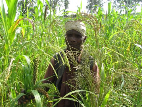 World Food Day: Preserving food diversity vital to achieve zero hunger by 2030