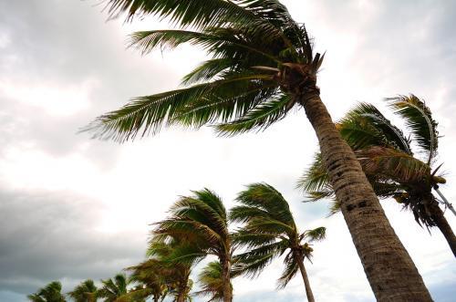 "IMD calls Titli, Luban cyclones ""rarest of rare"" occurrences"