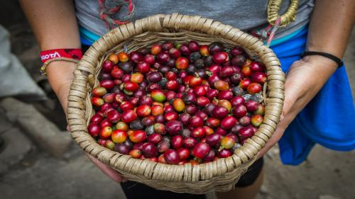 World needs to produce 3 times more fruits, vegetables than current levels