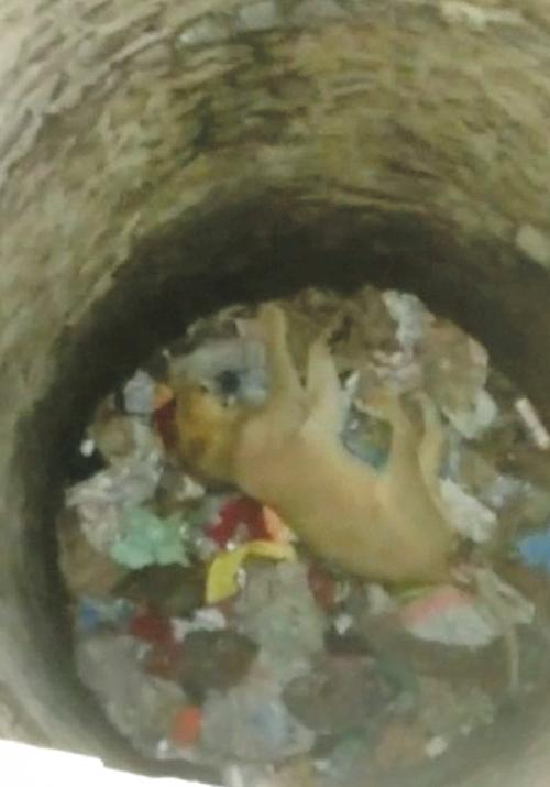 A lioness found dead inside a dry well in the Dalkhania range of Gir National Park and Wildlife Sanctuary.