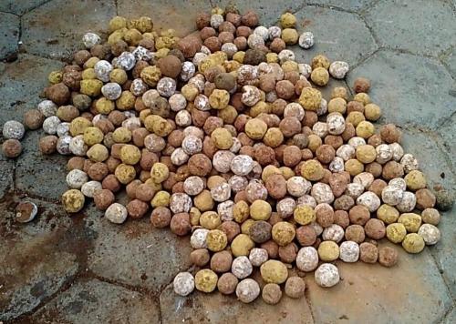 Tamil Nadu's innovative methods of seed plantation