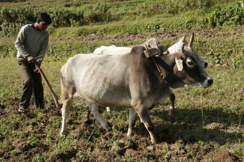 किसानों से 100 लाख हेक्टेयर उपजाऊ जमीन लेकर बंजर दी