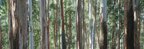 How alien invasive plant species threaten Western Ghats