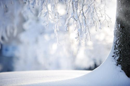 'Central European trees more prone to frost damage due to global warming'