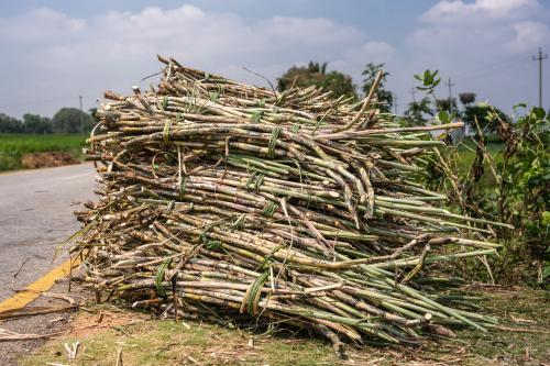 A stack of harvested sugar in Karnataka. India has released a new draft agriculture export policy. Credit: Getty Images