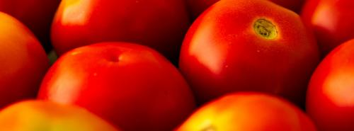 Tomato wholesale prices dipped by 54% this year