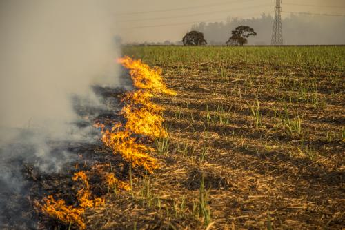 'Thinking Glocal to solve India's paddy-straw burning crisis'
