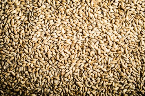 Researchers find new carbohydrate in barley