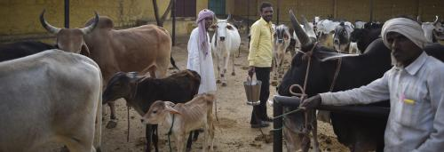 India's Cow Crisis Part 4: The stigma of Mewat