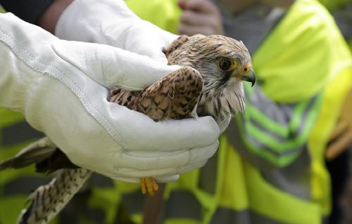 For the first time, Delhi govt plans to start bird hospitals